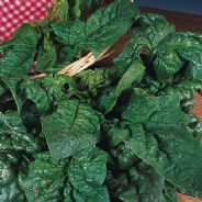 Spinach Winter Giant - 100 Grams - Bulk Discounts available